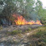 Melalui Bhabinkamtibmas, Kapolres Lingga Menghimbau Masyarakat Agar Tidak Membakar Hutan dan Lahan