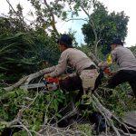 Polres Tanjungpinang Bersihkan Pohon Tumbang yang Timpa Rumah Warga