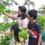Bangun Ketahanan Pangan Dengan Berkebun Di Rumah