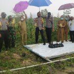 Polres Bintan Gelar Panen Raya Jagung Manis Perdana